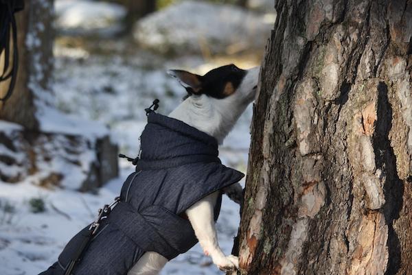 hund på aktivitetskurs